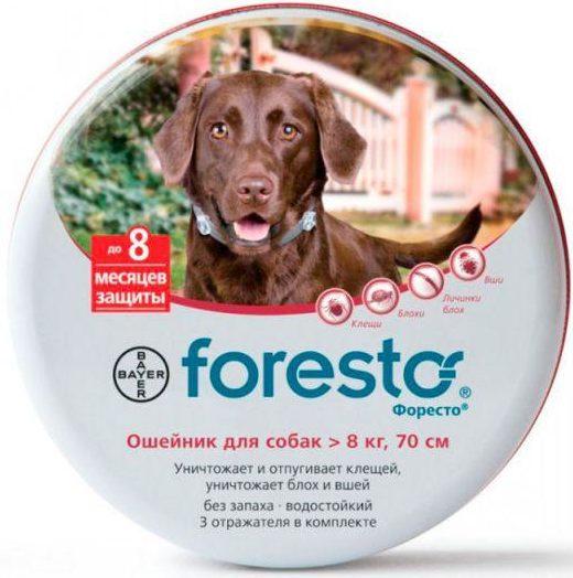 Форесто (Bayer), 70 см